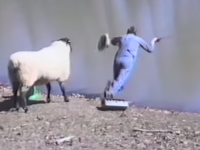 漫才か・・・羊が後ろから釣り師を・・・