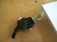 まだまだ修行の身?―スライディングの練習をする猫