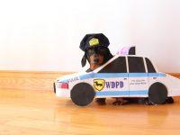 パトカーで巡回するダックスフント警官