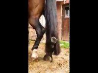 馬の尻尾がお気に入り?猫さんの玩具と化す馬さん