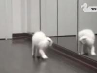 鏡に映る自分自身にびっくりな猫さんたち